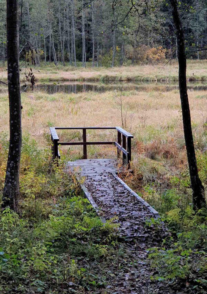 Holzweg auf dem botaischen Pfad in Paluse.