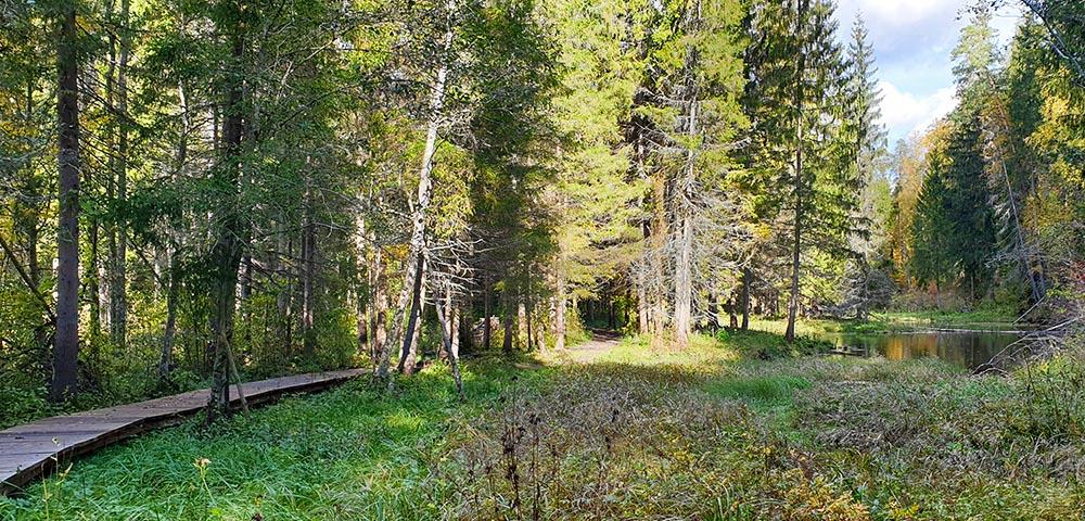 Cirulsi Nature Trail im Gauja Nationalpark