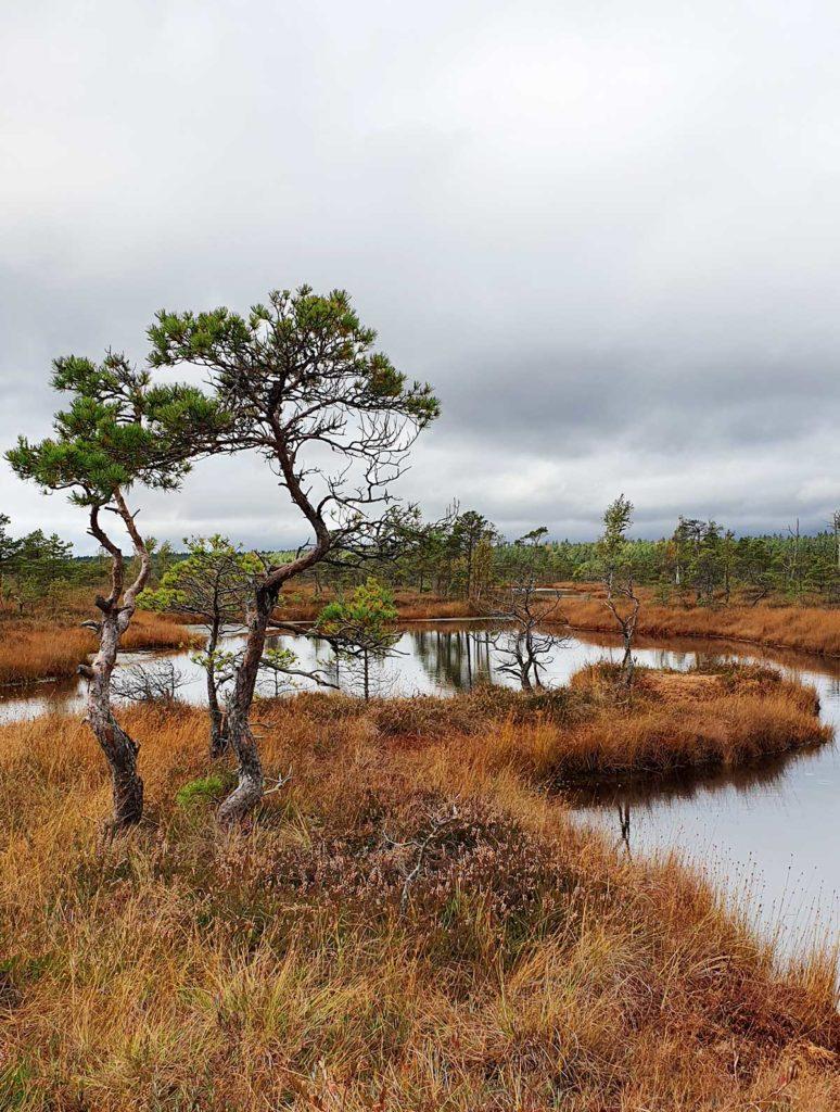 Landschaft im Kemeri Nationalpark