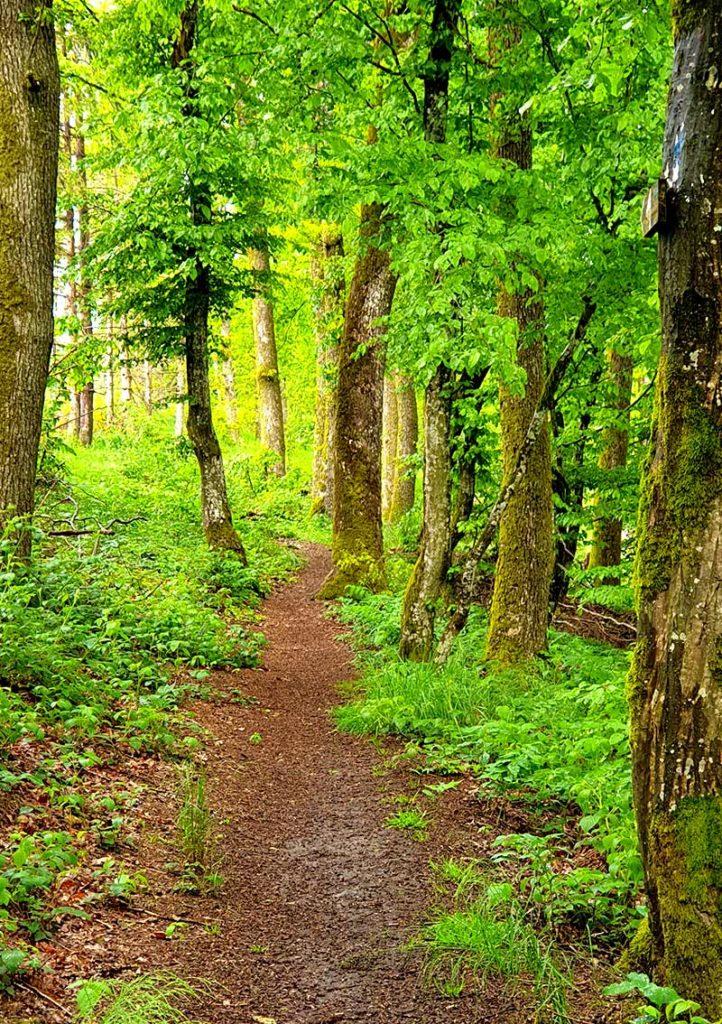 Wandern in Luxemburg - Wald beim Obersauer Stausee