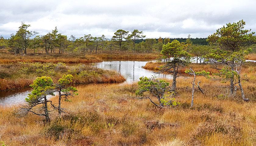 Ausflugsziele rund um Riga - Kemeri Nationalpark