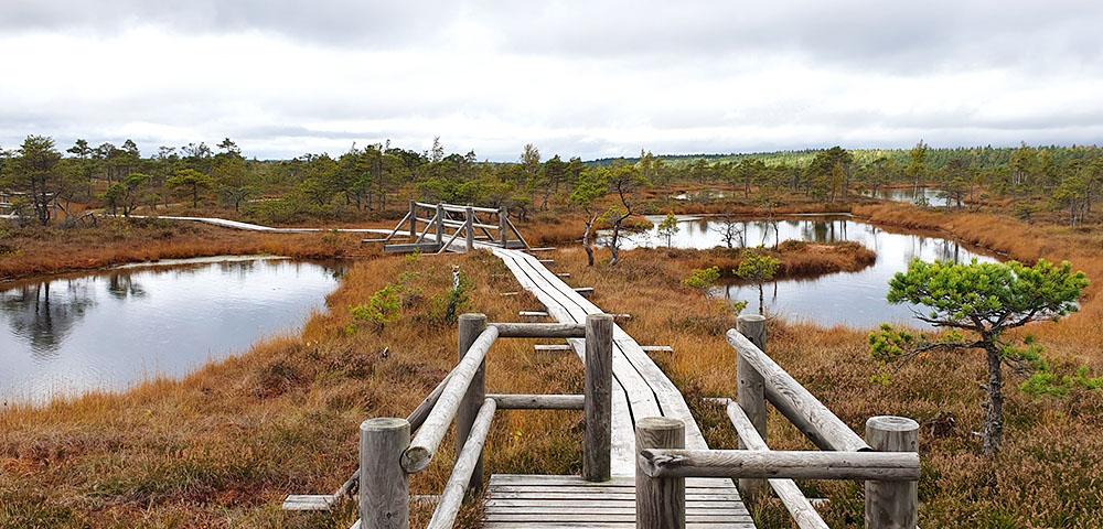 Der Moorwanderweg in Lettland