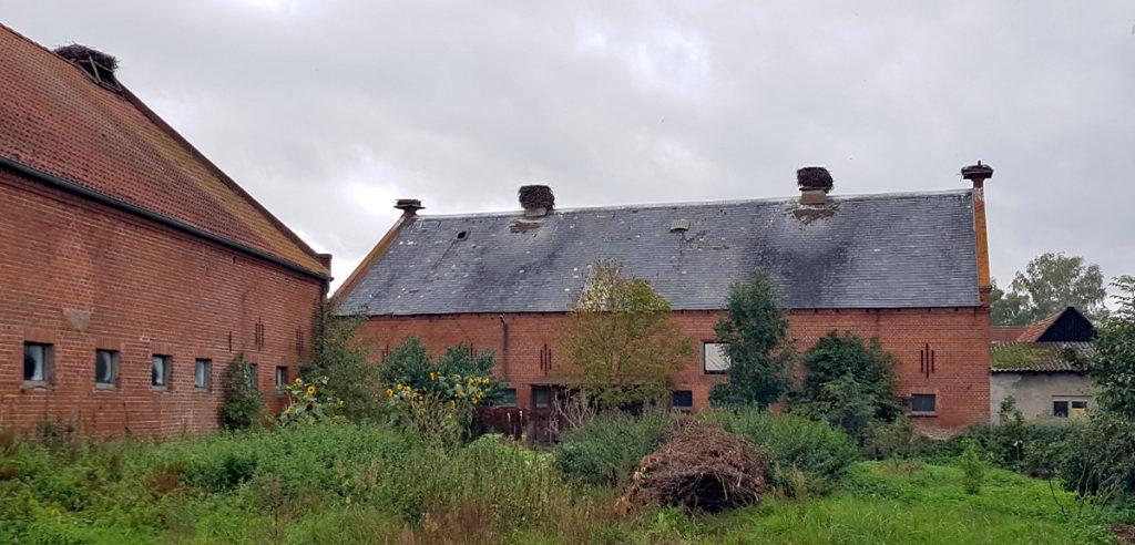 Storchennester in Rühstädt