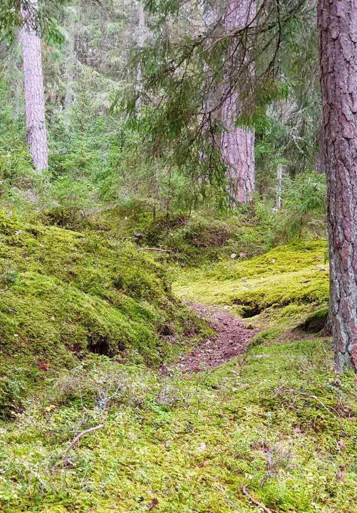 Wald in Lettland / Gauja Nationalpark